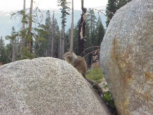 Wildlife is abundant in Yosemite National Park