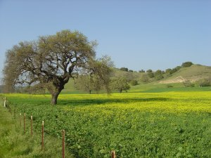 Enjo the tranquility in the Santa Ynez Valley