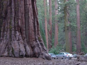 The entrance to Mariposa Grove.