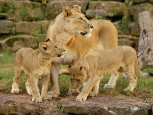 Fort Worth Zoo Photo: Fort Worth Convention & Visitors Bureau