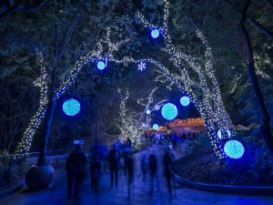 LA Zoo Lights, Los Angeles