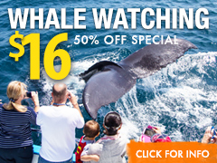 whale watching deal in Los Angeles