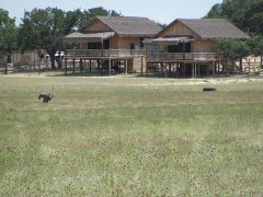 Serengeti Resort